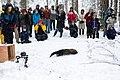 Snow forest - 49364810462.jpg