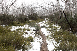 Mount Feathertop - Snow on the Bungalow Spur track near Federation Hut.