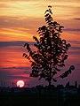 Sonnenuntergang Nordbaden.JPG