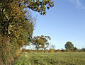 Southern edge of Ridley's Wood - geograph.org.uk - 598836.jpg