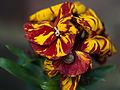 Spring flowers (13199603235).jpg