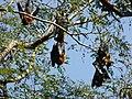 Sri Lanka Photo117.jpg