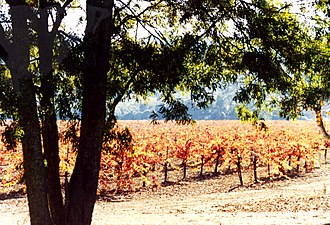 Stag's Leap Wine Cellars - Vineyards at Stag's Leap in 1990