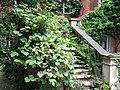 Stairway at Warwick House, Easton Lodge (geograph 1925242).jpg