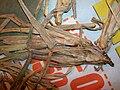 Starr 050427-0964 Cenchrus echinatus.jpg