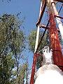 Starr 080612-8571 Casuarina equisetifolia.jpg