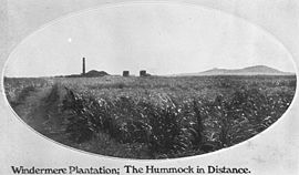StateLibQld 2 395625 Windermere Mill with the Hummock in the background, 1907.jpg