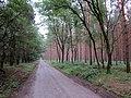 Steckby-Lödderitzer wood. Near Aken (Elbe), Sachsen-Anhalt, Germany. - panoramio.jpg