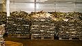 Stockfish (15413058142).jpg