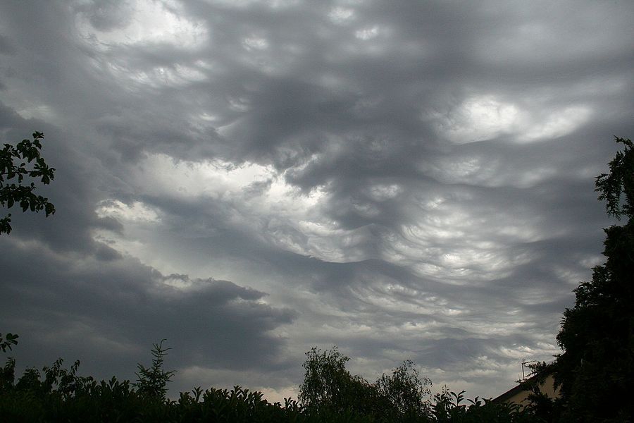"A stormy sky, with mainly Stratocumulus lacunosus clouds, photographed just before a stormy shower in June. Maine-et-Loire département, France. The lacunosus variety is rather uncommon. The typical ""holes"" punched in the cloud are downdrafts of cool, dry air in a layer of warm, moist, and ascending air. Geodata is not precise in order to respect author's privacy."