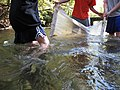 Students collecting with a kick seine (5574208585).jpg