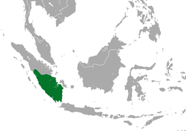 Sumatran Giant Shrew area.png