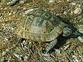Türkei Side Wanderung vom Adventure-Park Manavgat nach Seleukia -beinahe über die Landschildkröte gestolpert http-www.tuerkeiwandern.net - panoramio.jpg