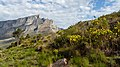 Table Mountain - 2018-07-16 - 7630.jpg