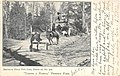 Taking A Hurdle, Prospect Park 1907.jpg