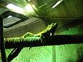 Taronga Zoo (6181949299).jpg
