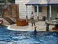 Taronga Zoo (6181966399).jpg