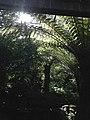 Tasmania gardens ferns.jpg