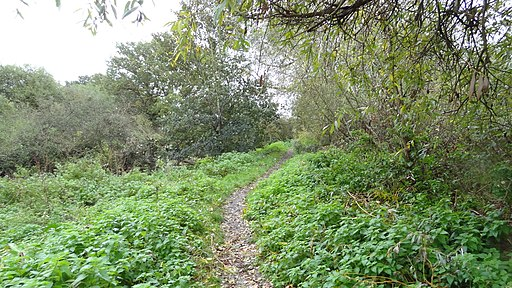 The Chase Nature Reserve, Barking 1