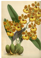 The Orchid Album-01-0038-0012.png