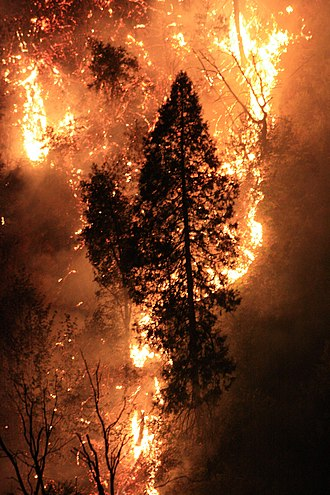 Rim Fire - About one-third of the fire burned at high severity, as is typical of mixed-severity forest fires.