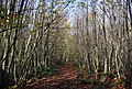 The Wealdway, Hurst Wood - geograph.org.uk - 1571663.jpg