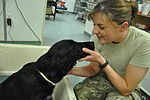 The dogs of war, saving lives but paying the price 120404-N-UR169-011.jpg