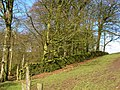 The edge of Cock Clough Plantation - geograph.org.uk - 340621.jpg