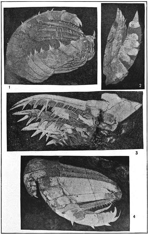 The king of the animal world 15 million years ago.jpg