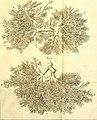 Theodori Kerckringii, Doctoris medici Opera omnia anatomica - continentia Specilegium anatomicum, Osteogeniam foetuum, nec non Anthropogeniae ichnographiam - accuratissimis figuris aeri incisis (14781662675).jpg