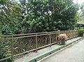 Tigers in Zoo Negara Malaysia (28).jpg