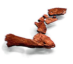 Tiktaalik - Limb shoulder to fin