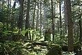Tongass national forest juneau img 7501.jpg