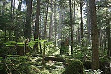 Tongass national forest juneau img 7501.jpg