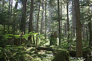 Natural resource management - The Tongass National Forest in Alaska is managed by the United States Forest Service