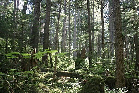 The Tongass National Forest in Alaska is managed by the United States Forest Service Tongass national forest juneau img 7501.jpg