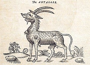 Antelope - Illustration from The History of Four-footed Beasts (1607).
