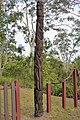 Totem. Variata NP, Port Moresby, PNG (48726424633).jpg