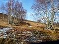 Track above Cambusmore Lodge - geograph.org.uk - 1193089.jpg