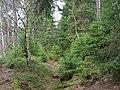 Trail at Silberteich 16.jpg
