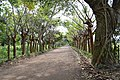 Trees RoadCatemaco.JPG