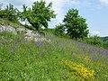 Trockenmauern und Salbei-Glatthaferwiesen.jpg