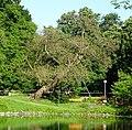 Trompetenbaum Friedrichsau 12-Ulm.jpg