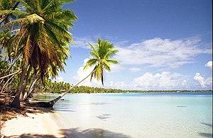 Tuamotus - Coconut palms, Takapoto