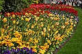 Tulips in St James's Park - geograph.org.uk - 398419.jpg