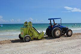 Tulum beach cleaning.JPG