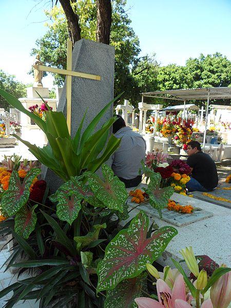 File tumba decorada con plantas ornamentales jpg for Algunas plantas ornamentales
