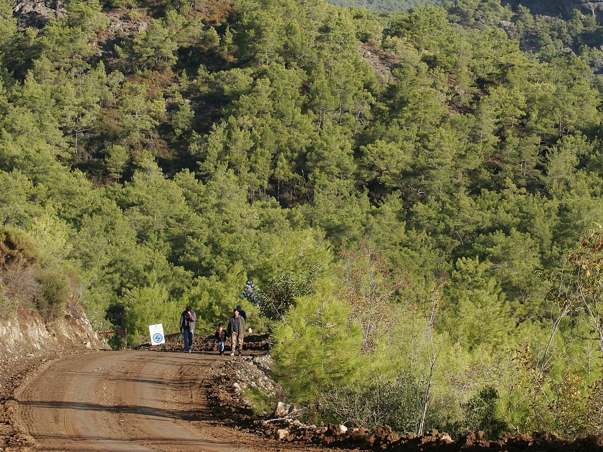 2019 Rally Turkey