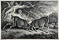 Two red deer stags fighting. Etching by W-S Howitt, ca 1798. Wellcome V0021537.jpg