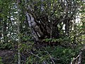Umetnost prirode - Vlasinsko jezero.jpg
